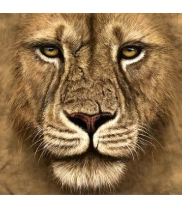 T-Shirt Guerrier Lion par The Mountain