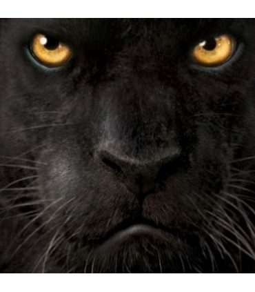 Black Panther Face - Big Cats T Shirt by the Mountain